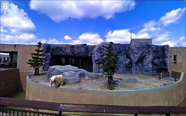 kebun-binatang-asahiyama4